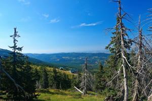 Waldsterben durch sauren Regen? (©123rf.com)