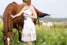 Meridiane beim Pferd