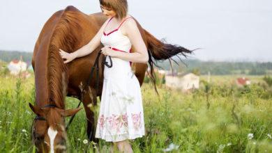 Photo of Meridiane beim Pferd
