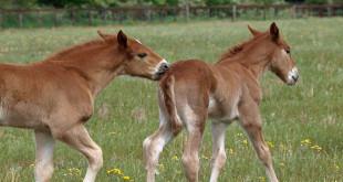 Stress in der Pferdezucht (©123rf.com)