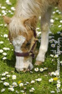 Pferde lieben Kräuter (©123rf.com)