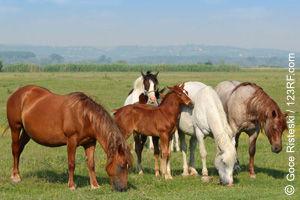 Pferdeherde in freier Natur (©123rf.com)
