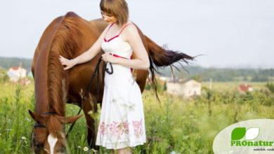 Photo of Welche Kräuter fördern die Gesundheit des Pferdes?