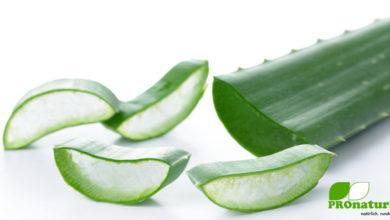 Aloe Vera kann die Gesundheit unterstützen