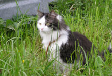 Katzenfell gegen Rheuma ein Mythos!