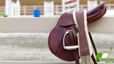 Photo of Wie finde ich den passenden Sattel für mein Pferd?