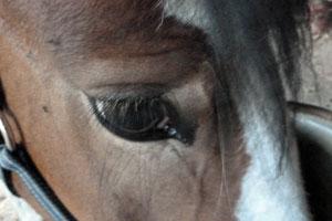 Wie sieht die Welt für Pferde aus?