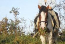 Photo of Wie sieht die Welt für Pferde aus?