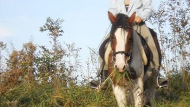 Wie sieht ein Pferd die Welt?
