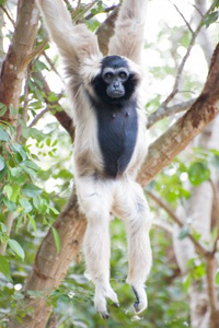 Wir sollten wie die Affen in Bäumen klettern (©123rf.com)