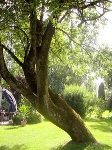 Schrägwuchs am Baum gibt Hinweise