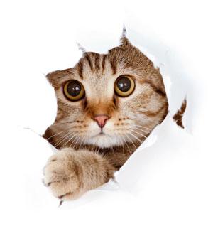 Katzen, unkomliziert und Divas beim Futter