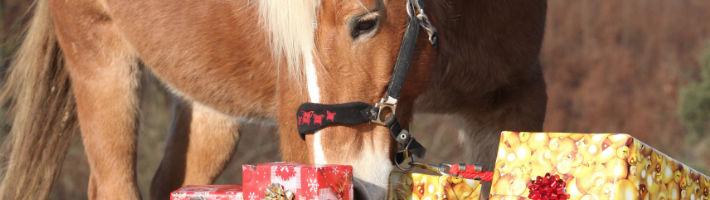 Zwar kein Haustier, allerdings freuen sich auch Pferde über leckere Mitbringsel