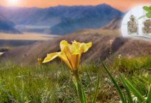Die Naturkraft des Altai für die Gesundheit. Nahrungsergänzungen von EVALAR inklusive Mumijo ab sofort PROnatur24 Shop!